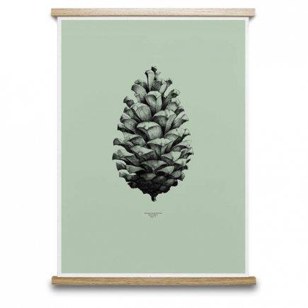 Pine Cone Dennenappel poster groen van Paper Collective