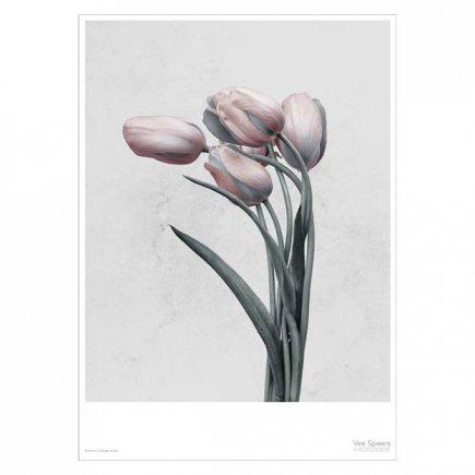 Botanica Tulipa Gesneriana Vee Speers poster 50x70 cm van VisseVasse byJensen