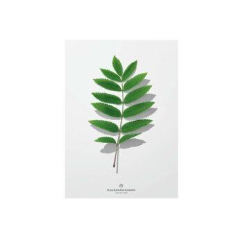 hagedornhage Folium F1 blad kaart met envalop