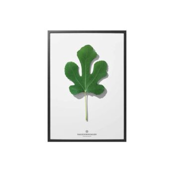 hagedornhagen-poster-met-blad-folium-f3-30x40